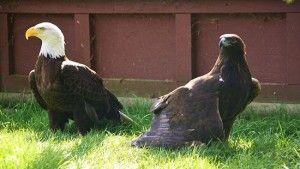 Front Education Cages «  O.W.L. Orphaned Wildlife Rehabilitation Society @owlrehab