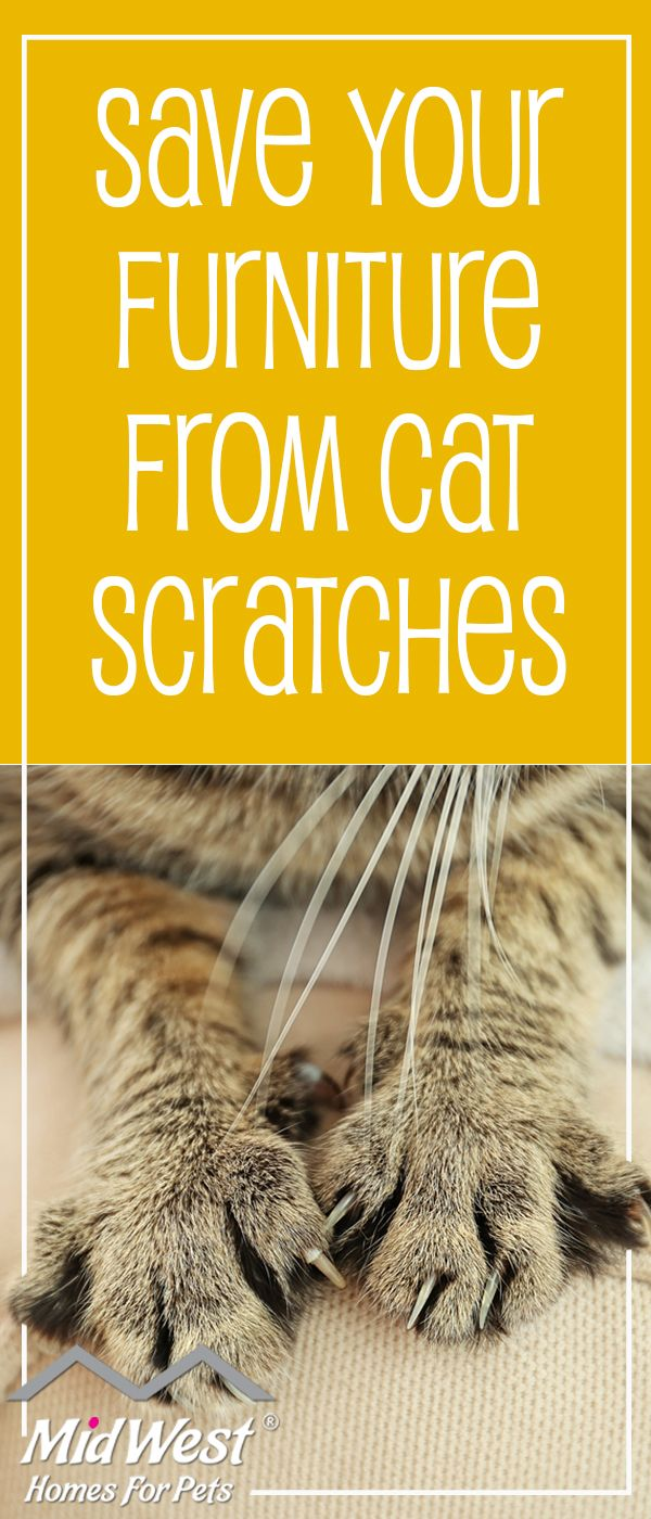 Is your cat clawing up your furniture. The 25  best Stop cat scratching furniture ideas on Pinterest