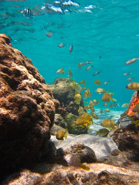 Peanut Island Underwater by Ant1_G, via Flickr
