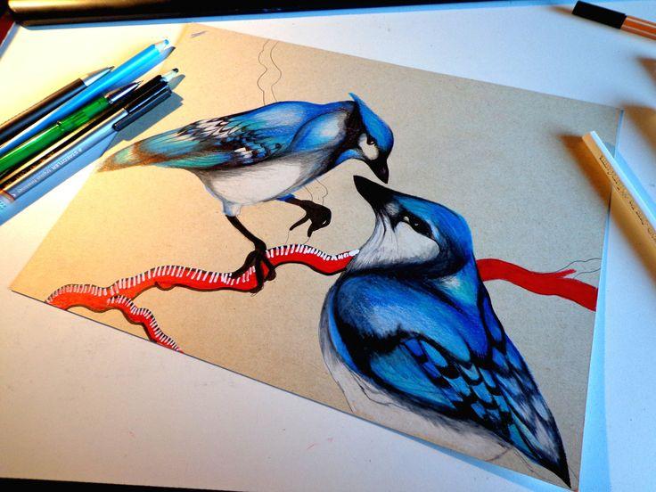 blue jays draw illustration