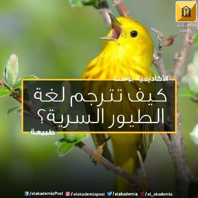 كيف تترجم لغة الطيور السرية من منا لا يأسره تغريد الطيور في الصباح الباكر لكن هل فكرت يوما بما تعنيه تلك الأصوات إن هذا الغناء ليس مجرد صوت لل Parrot Animals