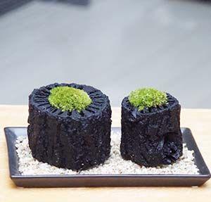 苔盆栽 (くぬぎ炭鉢)
