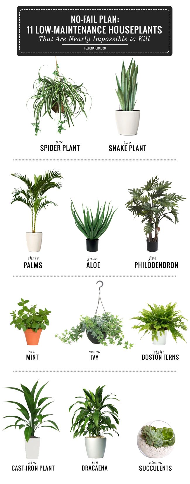 No-Fail Plan: 11 Low-Maintenance Houseplants That Are Nearly Impossible to Kill | http://hellonatural.co/11-easy-to-grow-houseplants/