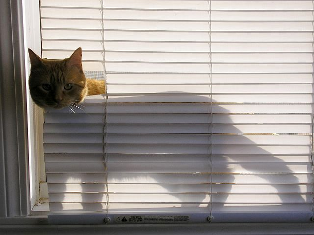 Remind you of anyone?  Venetian blinds verses cat. The cat always wins.