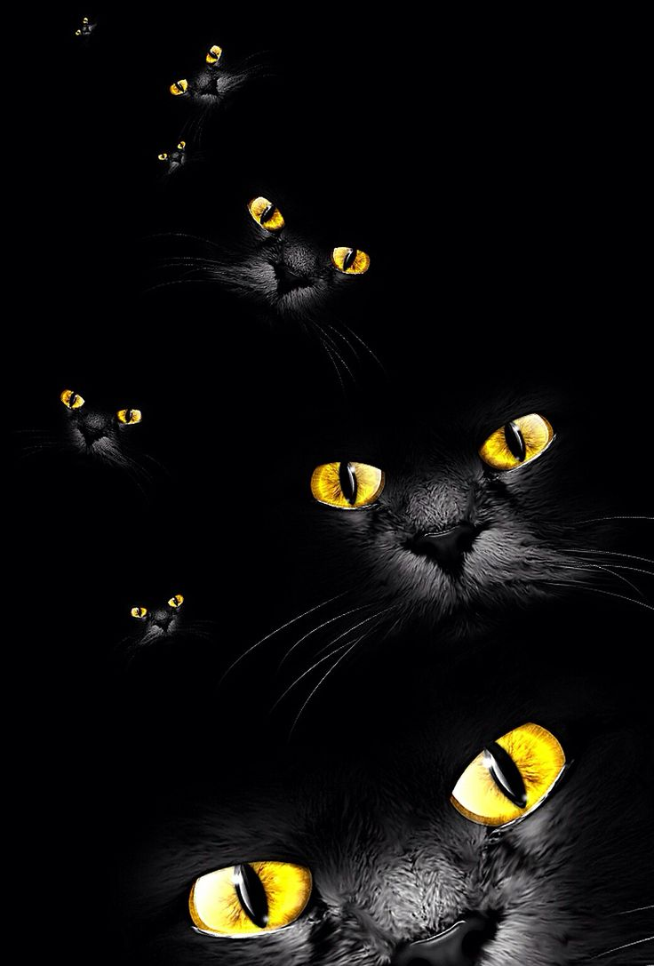 Black Cat With Yeallow Eyes