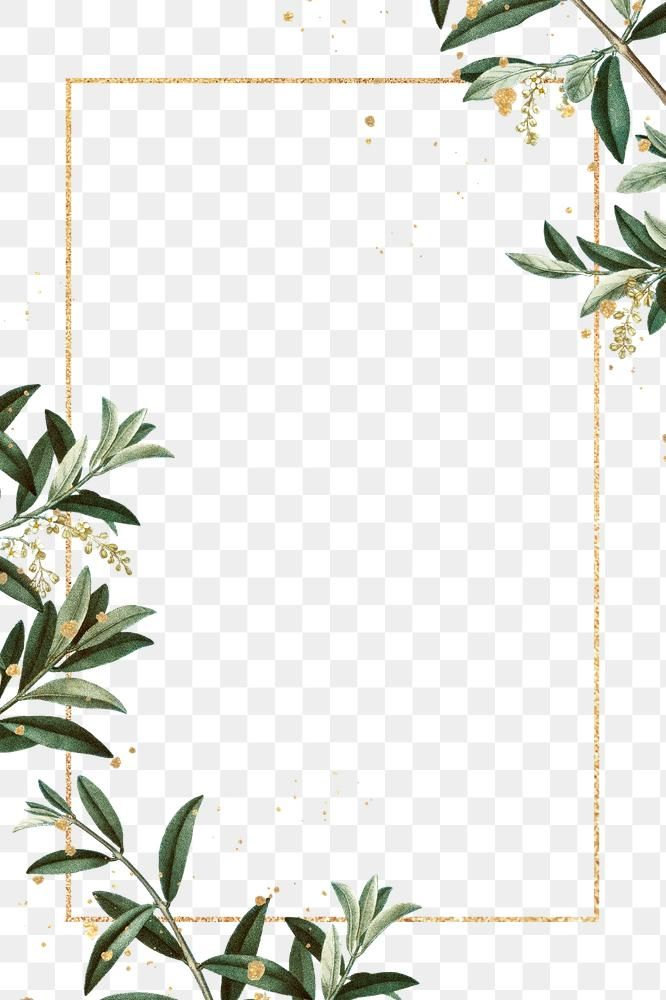 Olive Branches Frame Png Hand Drawn Border Design Space Free Image By Rawpixel Com Ningzk V Floral Border Design Frame Border Design Hand Drawn Border