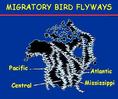 Fly ways