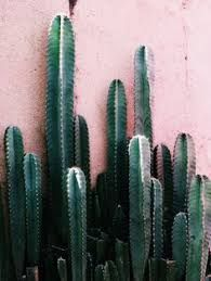 Image result for cactus in blue and white cache pot