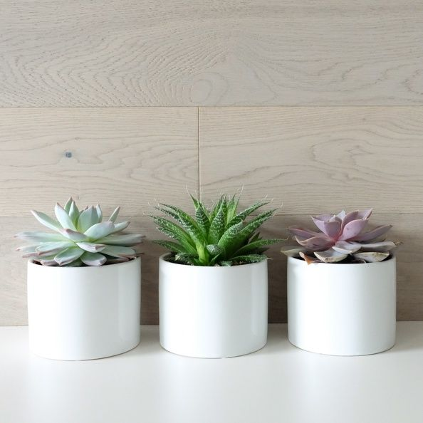 Introducing Brushed Oak Ibis | Kentwood Floors