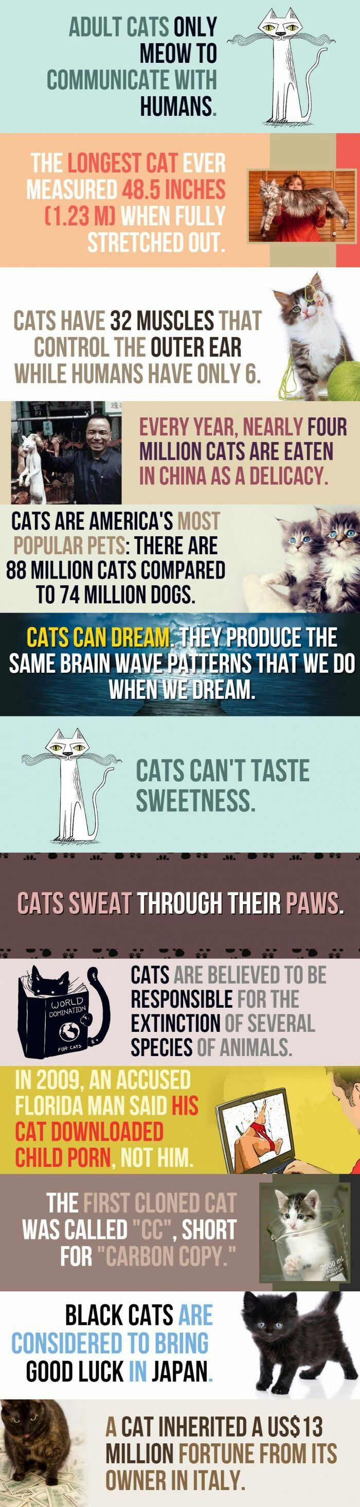 Facts about cats pt.1