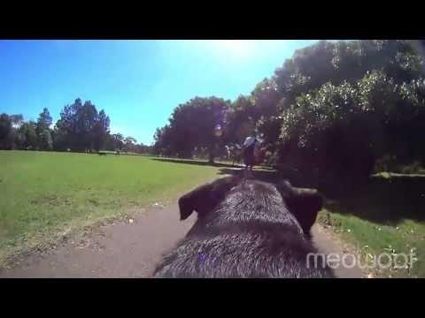 Hawthorn Canal Dog Park Sydney
