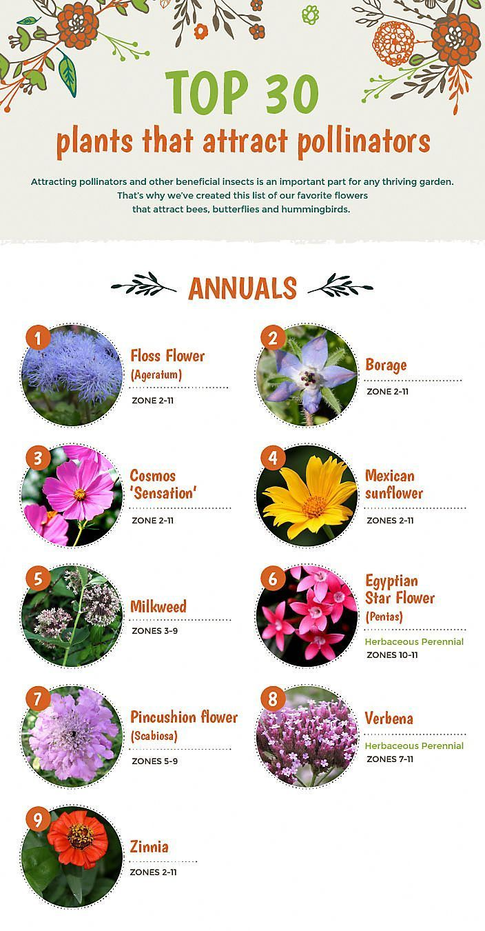 Best Flowers For Pollinators Click Through For A Full Vegetable Gardening Guid Pollinator Garden Pollinator Plants Attract Pollinators