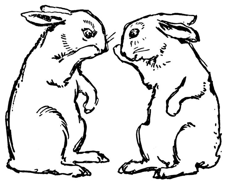 Rabbit Drawing Id 70598 Wallpho Com Rabbit Drawing Drawings Rabbit Pictures
