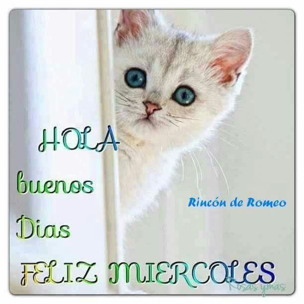 Feliz Miercoles Spanish Quotes From Nin Cats Morning