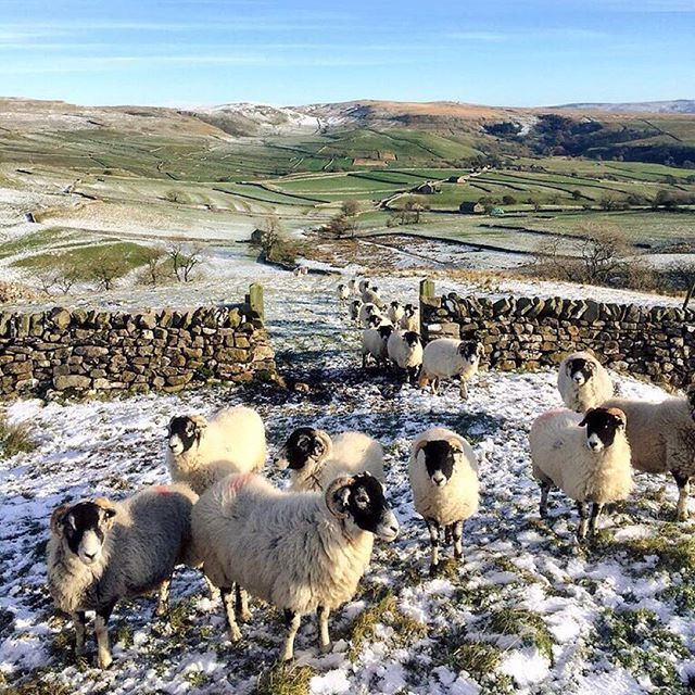 First signs of winter in the Yorkshire Dales thank ewe for sharing this lovely snap @hilltopfarmgirl