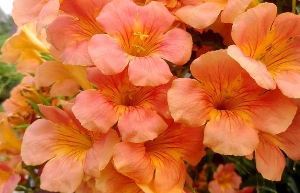 Plantas Con Flores Color Naranja
