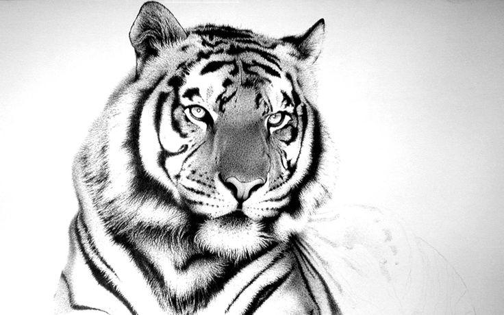 White Tiger Desktop Wallpaper Wide