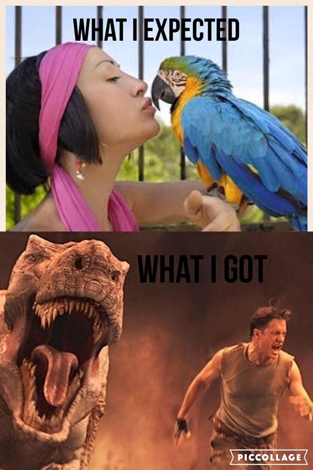 parrot reality.                                                                                                                                                                                 More