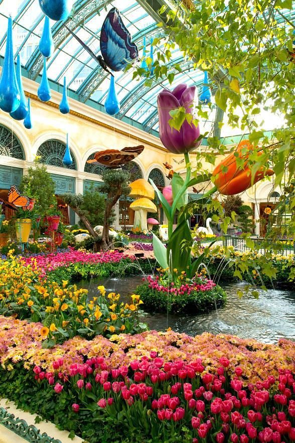 Vegas with my honey!  Spring Flora and Butterflies are Abloom at Bellagio's Conservatory & Botanical Gardens