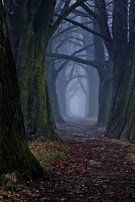 LES PLUS BEAUX ARBRES DU MONDE - ARBRES - Forêt sombre avec une belle allée d'arbres © Photo sous Copyright