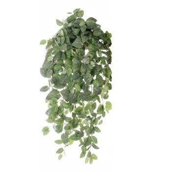 Les 26 meilleures images concernant plantes retombantes for Kajuard plantes