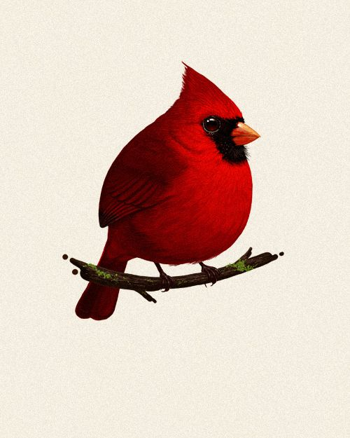 Cardinal, one of the Fat Birds of America series by Mike Mitchell  |  http://sirmikeofmitchell.com/index.php?/fat-birds-of-north-america/