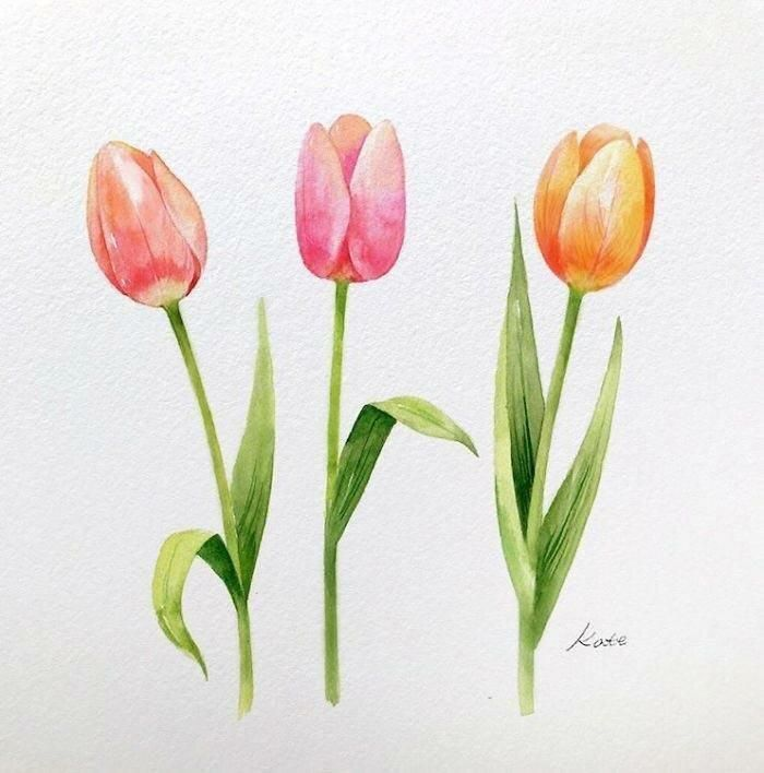 Orange Pink Yellow Tulips Cool Simple Drawings Colored Painting White Background In 2020 Flower Drawing Flower Drawing Tutorials Tulips Art