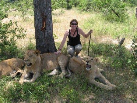 The lion encounter activity near Livingstone, Zambia