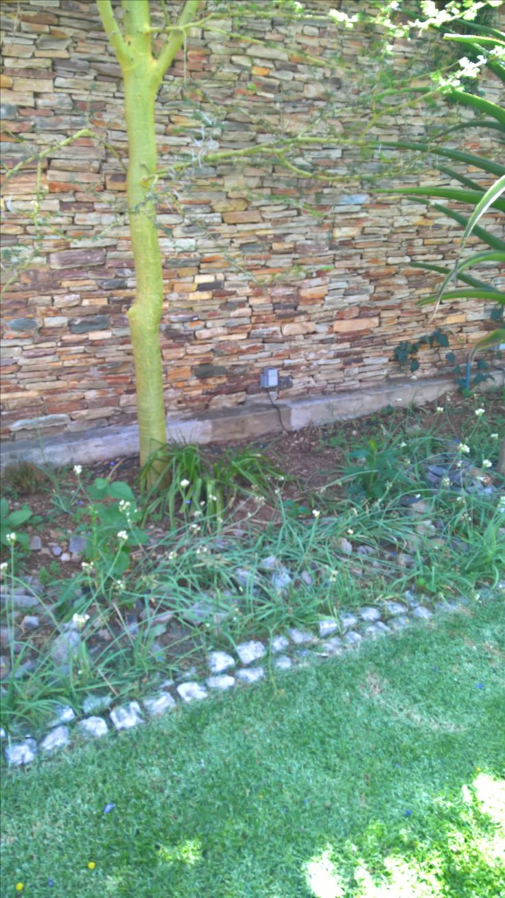 Bee removal in Johannesburg, bees removed in stone wall