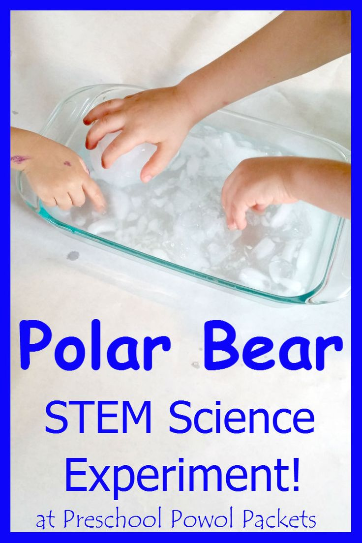 Polar Bear Science Experiment STEM! Great for preschool, kindergarten, and elementary ages!  Fun with polar animals, animal homes, winter, and arctic themes!