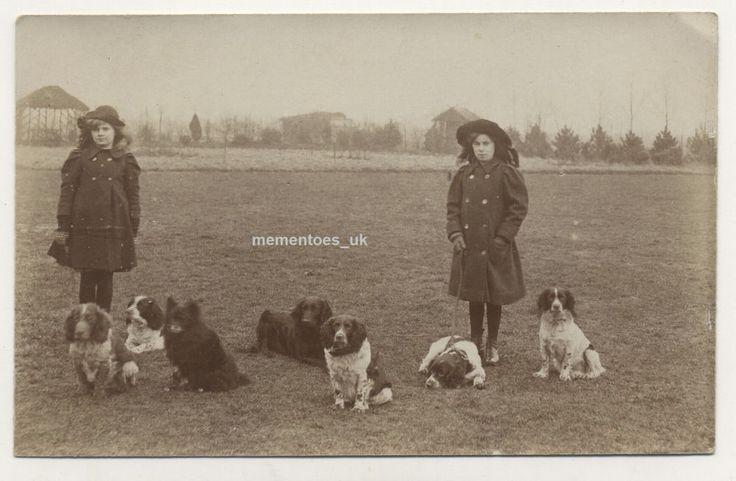 Cute Spaniel Dogs English RP Postcard  c1910 Edwardian era photograph sisters