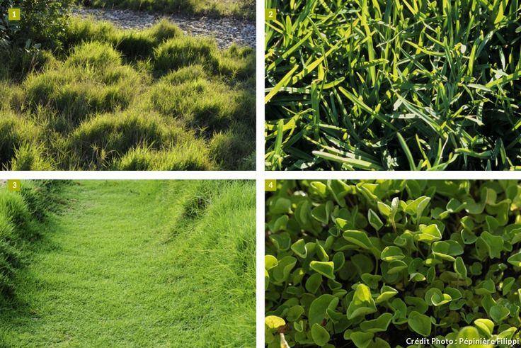 1000 id es sur le th me zoysia grass sur pinterest pelouse pelouses et irrigation. Black Bedroom Furniture Sets. Home Design Ideas