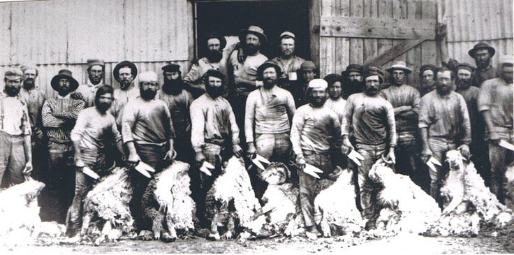 Shearers around 1900 from the Australian Stockman's Hall of Fame
