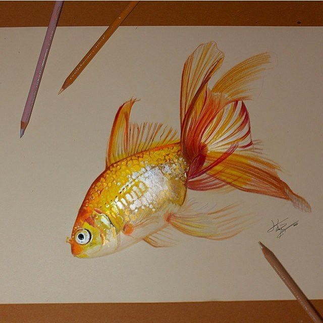 Wonderful gold fish drawing by @artcisne | Tag your artwork with #theartlovers for a chance to be featured!
