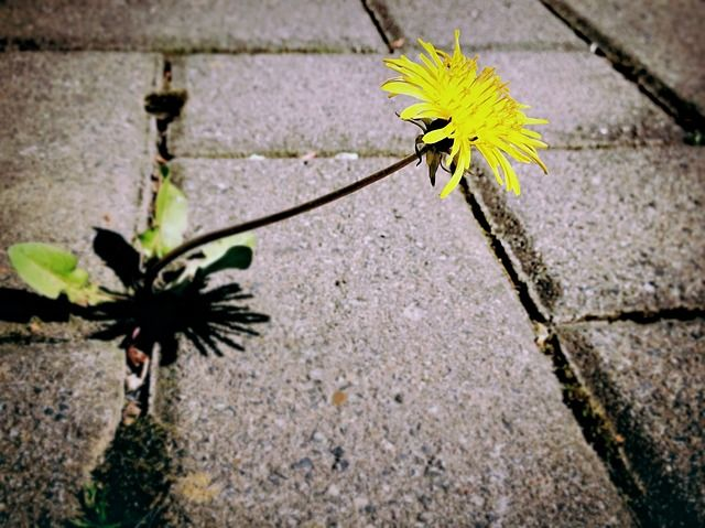 Facebook Pinterest Twitter Google+ WhatsApp StumbleUponIf you want to get rid of those pesky plants in your garden that pop up again & again, use vinegar. Vinegar is a natural weed killer and be used in effective weed control. It is eco friendly and spraying it kills weed within 2-3 days after application. How Vinegar …