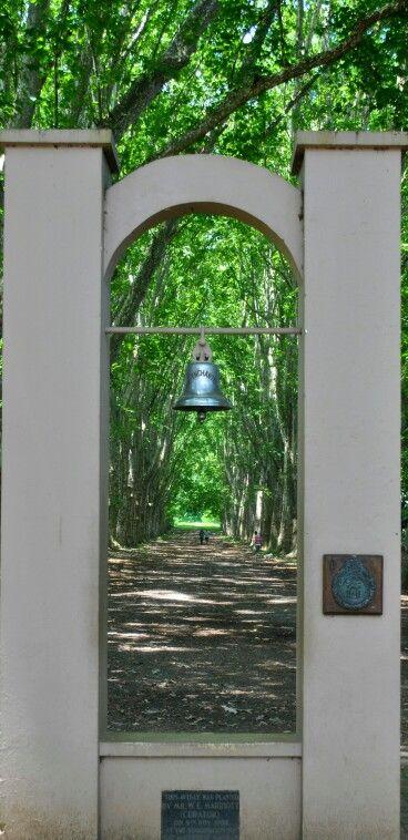 Pietermaritzburg botanical gardens KZN RSA