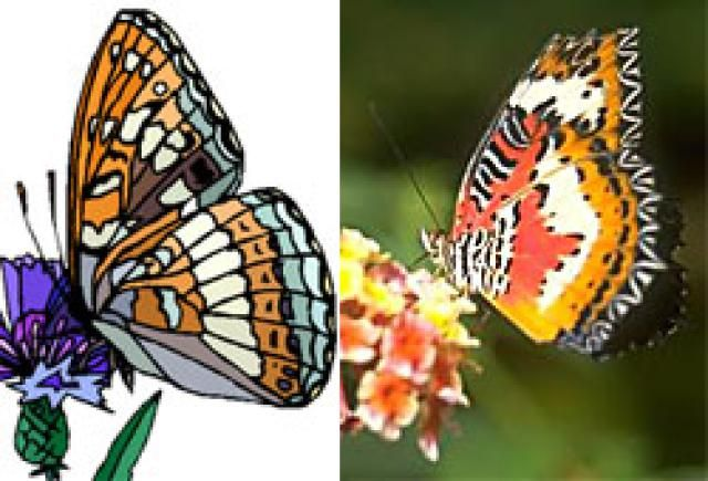 Pixel Image Editors and Vector Illustration Software: The simple vector image on the left would be created in an illustration program. The bitmap photo on the right would be edited in an image editor.