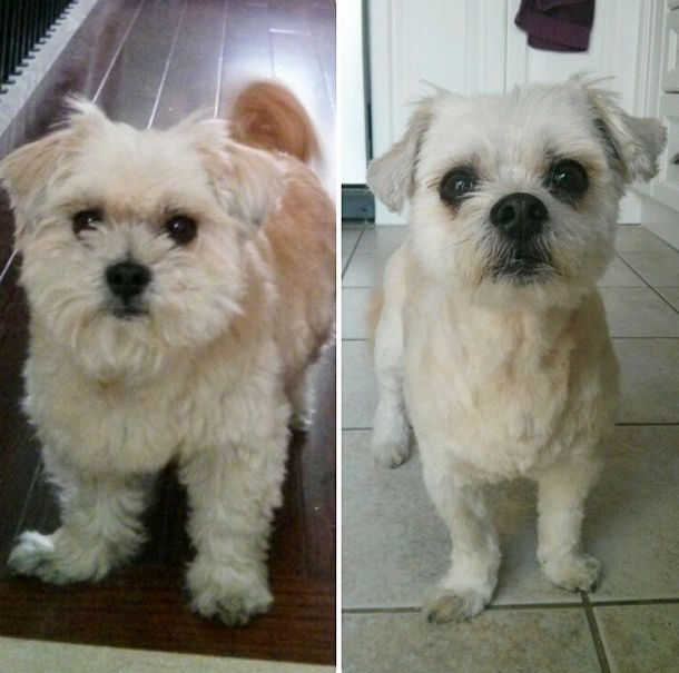 10 Dogs Before & After Their Summer Haircuts