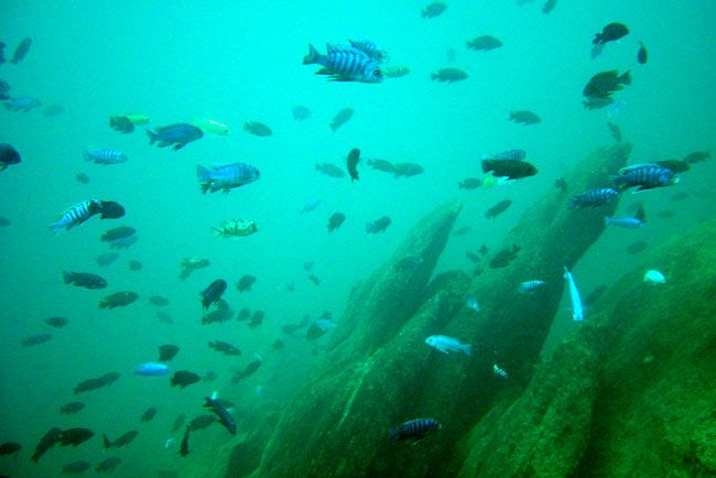 Lake Malawi