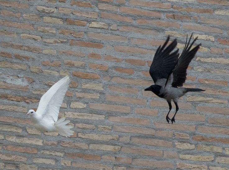 Per fare una analogia della assmilazione umana, Adballah dice la storia di un corvo che voleva imitare il modo di camminare della colomba e dopo un tempo scopre che non si ricorda piu il suo modo naturale.