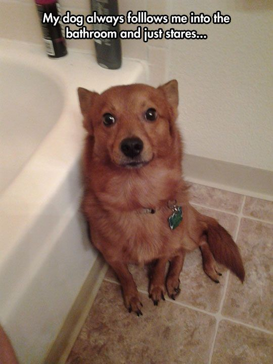 """Owner:  """"My dog always follows me into the bathroom and just stares...""""  Puppy-Dog says:  """"But I'm here to protect you 24 hours a day!  If you lock me out, you'll be totally unprotected and vulnerable."""""""