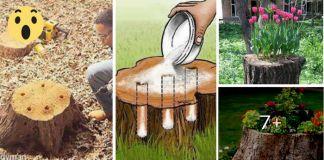 Transforma Los Troncos De Los Árboles Viejos En HERMOSAS Macetas Naturales ¡Se Verán Preciosas En Tu Jardín!