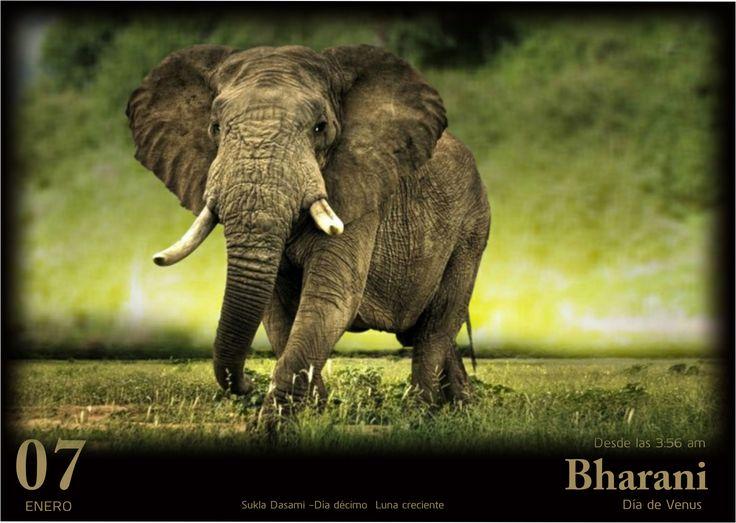 Hoy Venus es el regente debido a que el lugar donde se encuentra la Luna es el Nakshatra llamado BHARANI. Su símbolo animal es un elefante. Entre las personas de Aries, los que nacen dentro de la sección de Bharani son mejores lideres debido a su naturaleza equilibrada y sosegada conferida por Venus.