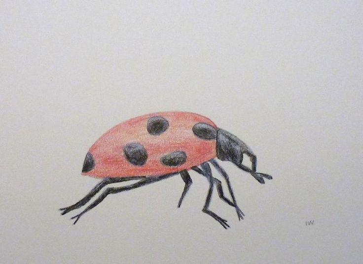 Iteke Verhees - Lieveheersbeestje