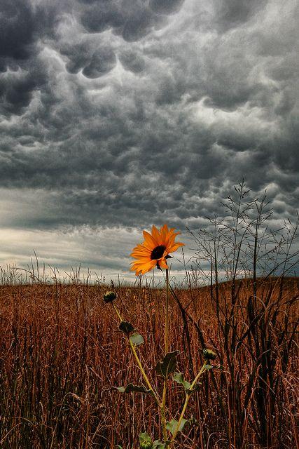 Nebraska storm clouds, prairie underneath