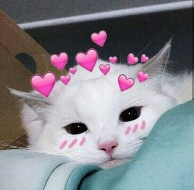 Sariitaboniita Dengan Gambar Anak Kucing Lucu Kucing Bayi