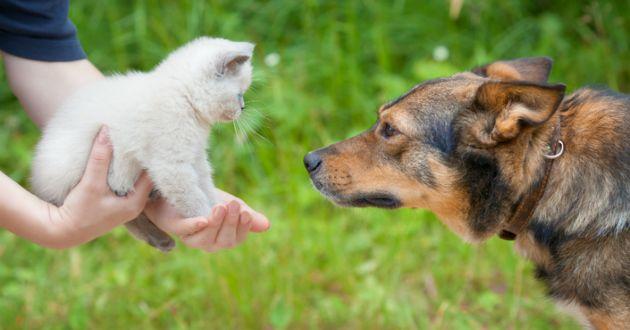 L'appli pour trouver l'amour grâce à son chien