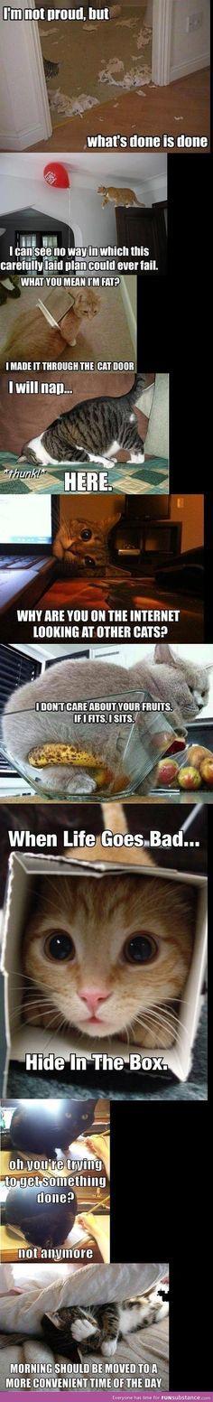 Cat crazy logic