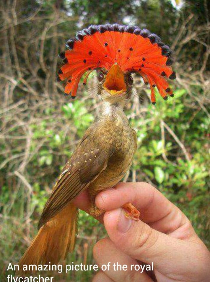 Cool looking bird   Animals- Puppies and such   Pinterest