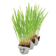 Grassapillar - 3/4 cup potting soil and 2 tbsp grass seed in a bowl.  Water to moisten.  Add to 3 sections of egg carton